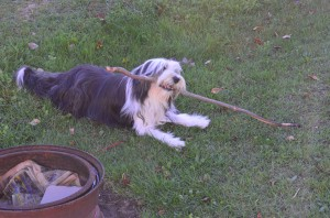 Give her a stick and she's happy