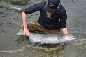 A Chinook salmon getting weighed and measured