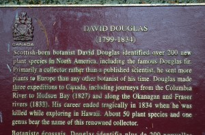 Name sake for the Douglas Fir trees - giant trees 250'+ in height-Cathedral Grove