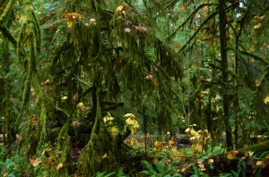 Looks like the enchanted forest -Cathedral Grove - all the maple leaves suspended where they fell