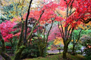 Amazing colours in the Japanese Garden