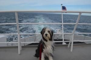 Jazz enjoying the Ferry ride