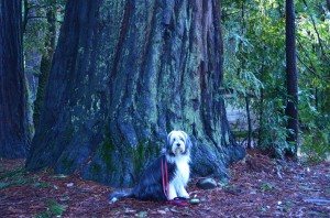 Tree Hugger #3