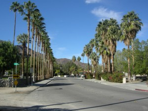 No shortage of palms heading into the ritzy area