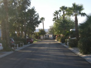 """Not Palm Springs - this is our street called """"Burning Tree"""" after a golf course"""