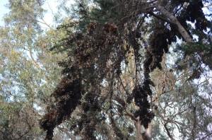 Trees full of butterflies