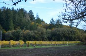 Close up of Sterling vinyards