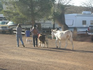At our park, some walk their dog while Mary walks her pony and donkey AND that's what she calls them
