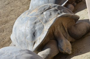 Tortise # 5 is 160 years old!