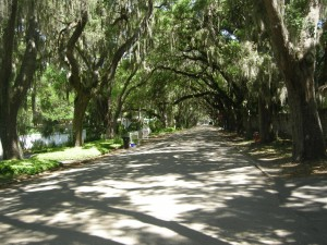 not an unusual site - live oak trees and Spanish moss