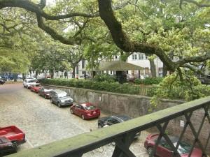 A canopy of live oak trees