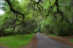 Driveway approaching plantation house